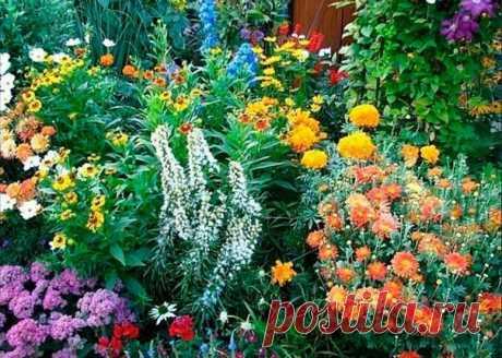 Запись на стене 10 МНОГОЛЕТНИКОВ, ЦВЕТУЩИХ ВСЁ ЛЕТО!Часто начинающие цветоводы интересуются, какие многолетники цветут все лето. Именно для них мы нашли подборку самых красивых, на наш взгляд, цветов, которые должны понравиться и остальным.1. Астранция крупная (Astrantia major)Красивое многол..