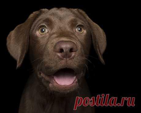 Собаки-улыбаки от австралийского фотографа Алекса Кёрнса / Питомцы