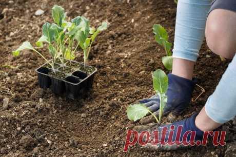 Календарь садовода-огородника: когда сажать и сеять | Азбука огородника | Яндекс Дзен