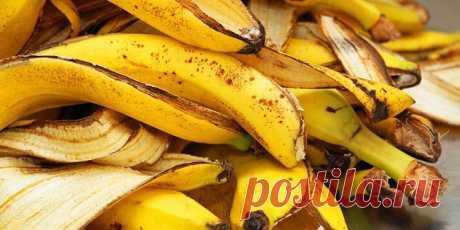 Банановая кожура как удобрение для комнатных растений Удобрение из банановой кожуры в домашнем цветоводстве — одно из эффективных и проверенных временем подкормок. Недостаточно известное в России оно с успехом применяется за рубежом уже много лет. Сущест...