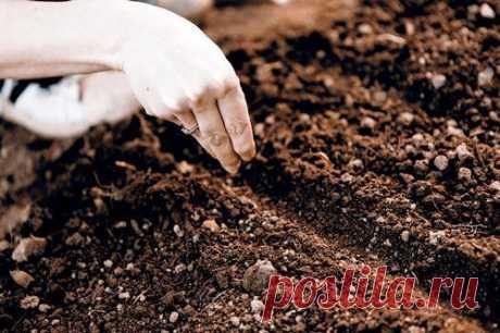 Посев ранней весной. Растения, которым не страшны заморозки