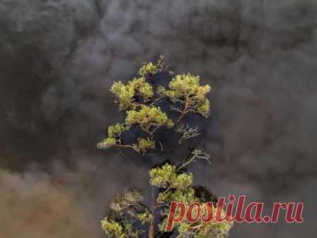 Даже упавшее в озеро дерево продолжают окутывать облака – нужно только взглянуть с правильного ракурса. Автор снимка – Александр Кузнецов: nat-geo.ru/community/user/18771/