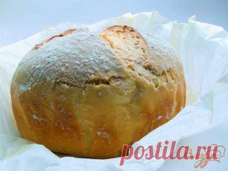 Яблочная закваска, здоровая альтернатива дрожжам. - рецепты с фото на vpuzo.com