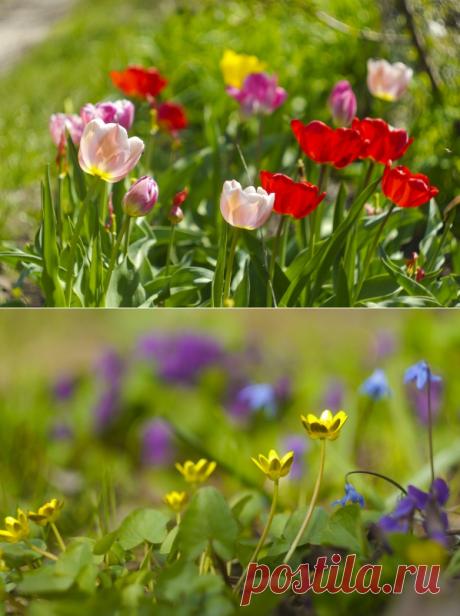 Какие луковичные цветы сажают осенью: каталог названий, фото, описание