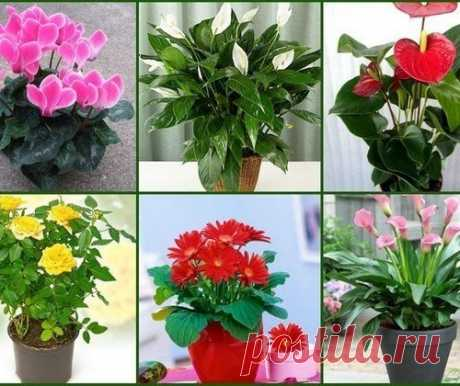 Los secretos por el cuidado de las plantas