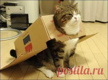 30 уморительных фото котиков, заполнивших собой все емкости и коробки, которые они только нашли
