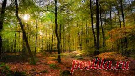Лес обои, лес картинки, лес фото