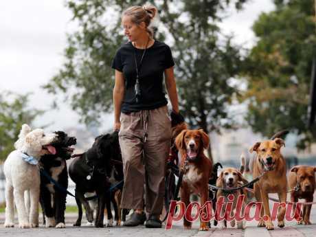 Ученые доказали, что собачники живут дольше | nashi-pitomcy.ru