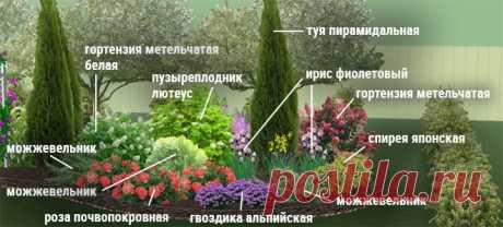 Клумбы непрерывного цветения – схемы с описанием цветов | Дизайн участка (Огород.ru)