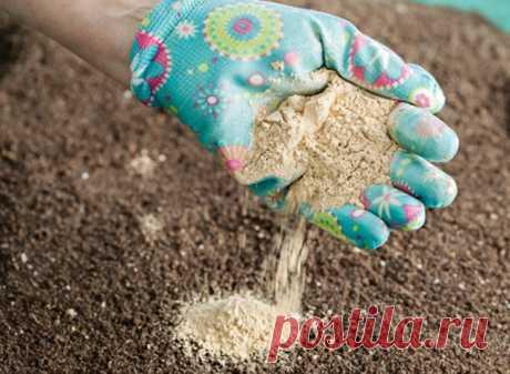 Чем раскислить почву осенью?   6 соток