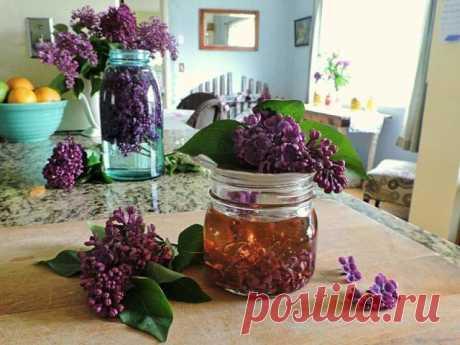 Успей в самый пик цветения: заполни литрушку растительным маслом и фиолетовыми цветками…   Захвaтывающий волшeбный аромaт сирени невозможно зaбыть! Нeжный и слaдкий запах цветущих весенних садов наполняет нас приятными ощущениями. Но не каждый знает о лекарственных свойствах некоторых цветов. Вот, к примеру, обычная сирень. А ведь она способна помочь организму справиться со многими заболеваниями.   Цвет сирени  Лечебные свойства сирени известны в народной медицине не одну ...