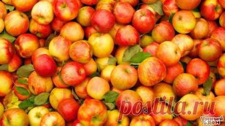 7 причин, по которым нужно есть яблоки 1). Яблоки защищают от болезни Альцгеймера. 2). Яблоки служат отличной профилактикой против рака. 3). Яблоки полезны для профилактики повышенного уровня холестерина. 4). Яблоки полезны для сердца и сосудов. 5). Яблоко защитит от диабета. 6). Яблоки способствуют снижению веса. 7). Яблоки после еды (особенно углеводной) защищают зубы от кариеса.