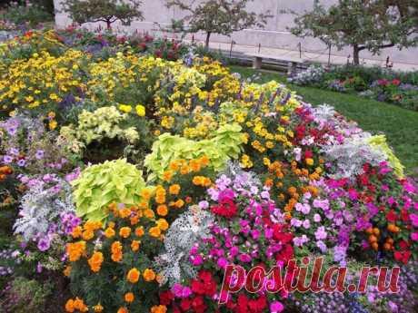 Какие цветы можно сеять под зиму Цветы посаженные под зиму будут отличаться хорошим ростом, устойчивостью к болезням и погодным условиям. Так же, посеяв семена под зиму вы освобождаете себе время весной. А его как раз тогда и не хватает...