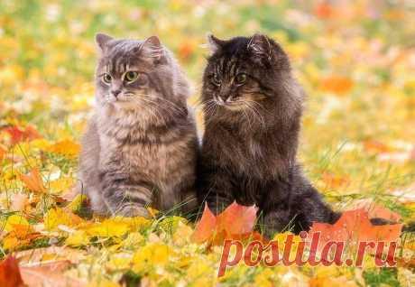 Что такое осень для кота?