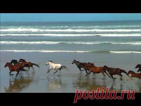 ▶ Horses Ocean Meeting Budulaj - Лошади Океан Встреча Будулай.avi - YouTube