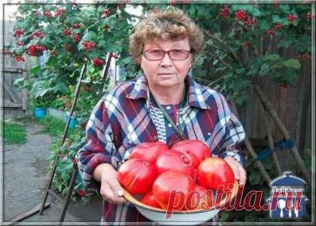 """Помидорные секреты быстрого созревания. Уход. «Хочешь вырастить — подкорми», вот мое правило. Подкармливать начинаю через 2 неделипосле высадки помидорной рассады.  Подкормку повторяю каждые 2 недели до середины августа. Что бы плоды у помидор были крупнее и созревали быстрее. Чтобы у томатов плоды были покрупнее и созревали на несколько дней раньше, готовлю для них такой """"напиток"""" - на 10л воды"""