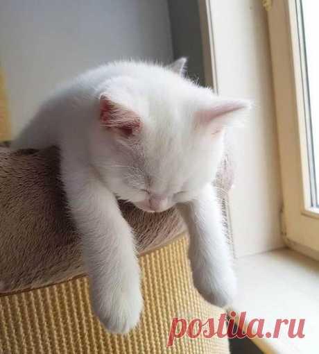 Ооочень устал