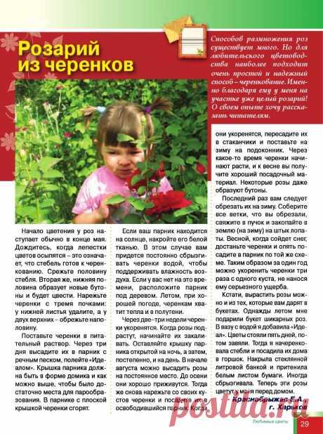 Розарий из черенков