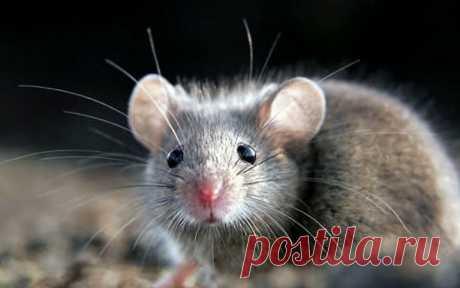 Спасибо Вишневскому, за его одноименную мазь, дача спасена от крыс и мышей. Рассказываю, как правильно намазать | Жизнь огродника | Яндекс Дзен