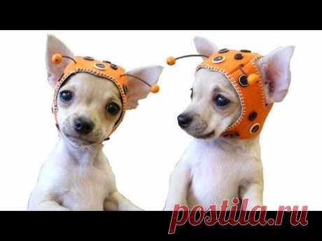💗 MY first knitted HATS for DOGS 💗 ОБЗОР 🐱 вязаные ШАПКИ для СОБАК/КОТОВ 🐱 FASHION 🔒