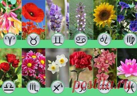 Подбираем цветок - талисман согласно вашему знаку Зодиака / Мистика