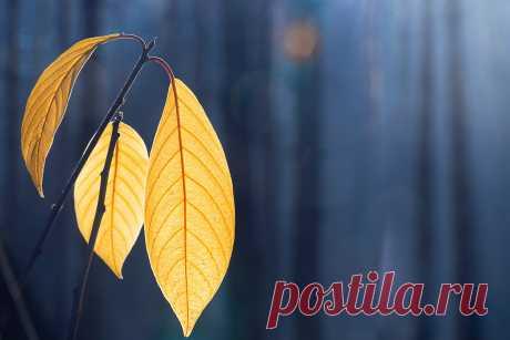 Поздняя осень - фото конкурс Обычная фотография