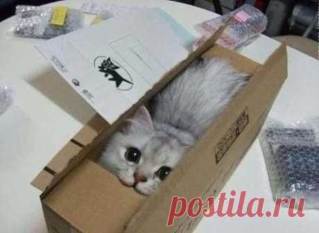 Разбирала коробки с ненужными вещами.Нашла много интересного...и пять раз кота. Котэ покорит мир
