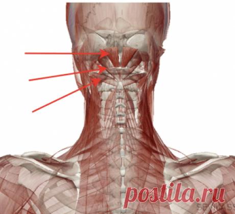Сосудистая гимнастика: Спасительное средство при гипертонии и головных болях Голова болит по множеству причин. Для устранения головных болей разработана сосудистая гимнастика, которая включает в себя специальные упражнения для шейного отдела позвоночника и релаксации мышц шеи.Описанные в статье  приемы помогут вам избавиться от головокружений, головных болей, снять повышенное давление.