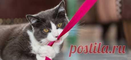 10 советов, как сохранить умственные способности вашей кошки | PetTips
