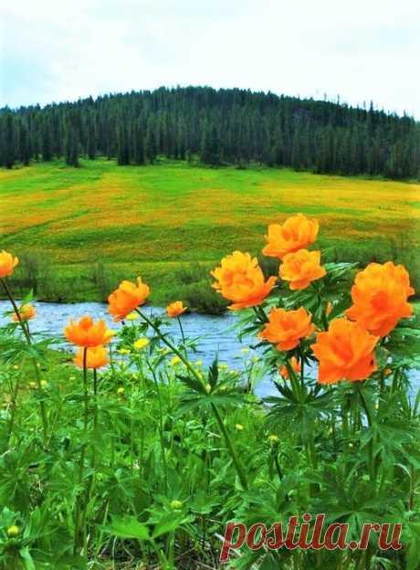 (13) Наш мир - удивительный , и красивый, весёлый и мудрый.