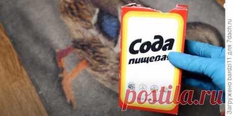 Как избавиться от запаха кошачьей мочи. Видео