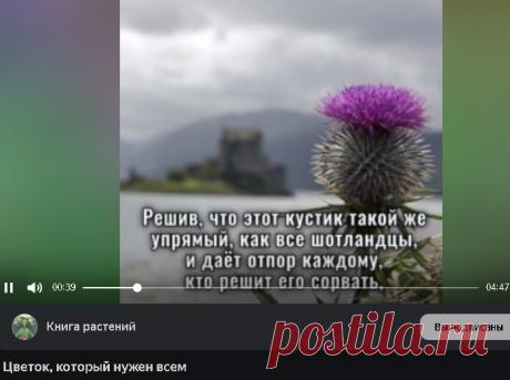 El Yandex