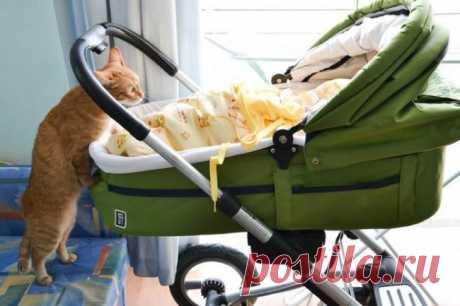 Оставили ребенка на усатого няня | Kote.Rjaka.com