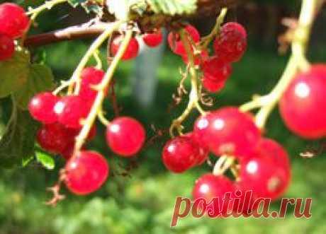 Протертая красная смородина с сахаром | Рецепт | Заготовки на зиму