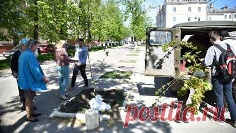 500 кленов, вязов и дубов высадят в Вологде. Новости Вологды. Общество