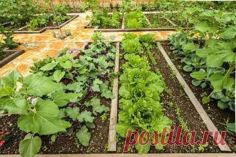 Помидоры ненавидят огурцы: растения-компаньоны на одной грядке   таблица совместимости овощей. Какие овощи и цветы стоит посадить рядом?