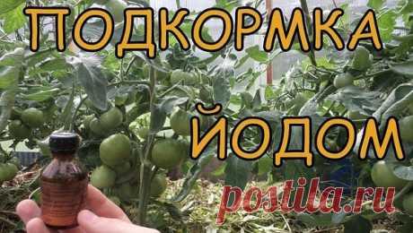 (4) Одноклассники    ВОСЕМЬ МАЛЕНЬКИХ СЕКРЕТИКОВ (САДОВОД - САДОВОДУ)