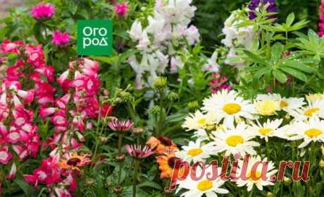 Как продлить цветение многолетников на все лето с помощью обрезки   В цветнике (Огород.ru)