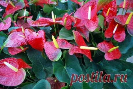 ТОП-50 декоративных растений очищающих воздух в нашем доме или квартире Комнатные растения, очищающие воздух, создают уют в квартире, поглощают шум, выделяют полезные фитонциды и кислород. Благодаря интенсивному испарению влаги через листья повышается влажность воздуха....