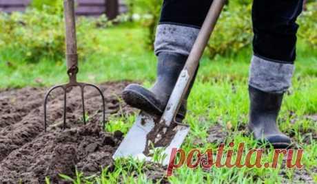 Лунный посадочный календарь на апрель 2019 год садовода и огородника: благоприятные дни для посева на рассаду, сроки обрезки, подкормки, ухода, обработки