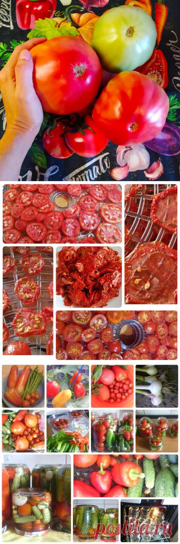 Период заготовок из помидоров