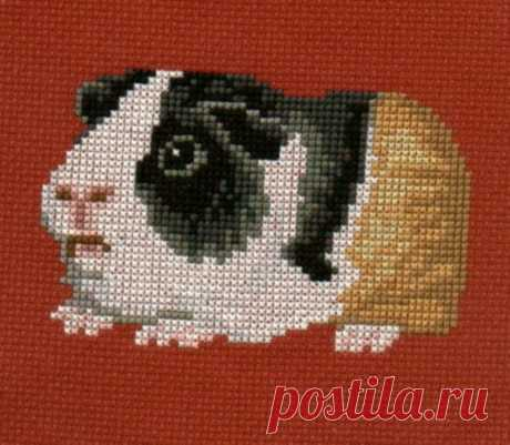 Guinea Pig counted cross-stitch chart   Etsy