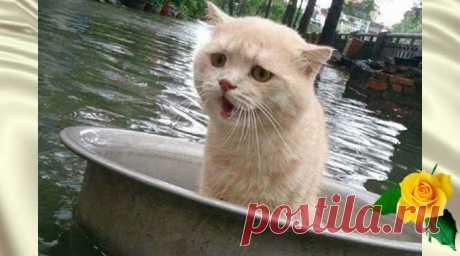 Во время наводнения этот котик придумал как выжить — Калейдоскоп чудес