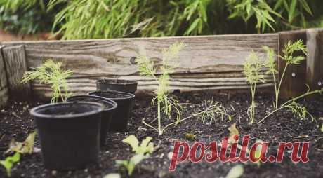 Какие растения нельзя сажать рядом на огороде? Шпаргалка для дачников Фасоль и чеснок, картофель и помидоры, редька и капуста — рассказываем, каким растениям соседство друг с другом не пойдет на пользу.