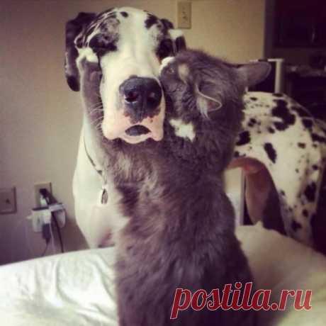 Забавные фотографии дружбы собак и кошек (17 фото) Забавные фотографии дружбы собак и кошек (17 фото) Кошки и собаки видятся нам непримиримыми врагами, между которыми не может быть ничего общего. Однако в мире...