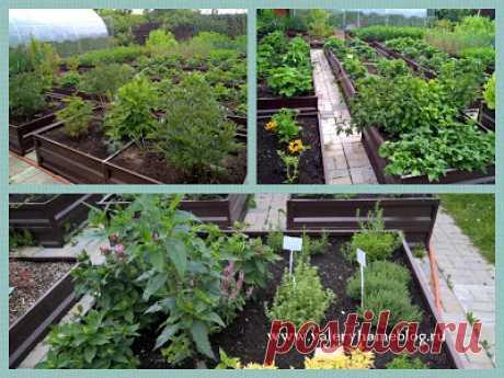 Домашний блог Валерии Питерской: Как обустроить огород.