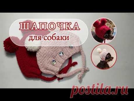 Шапочка для собаки, чепчик, вязание спицами