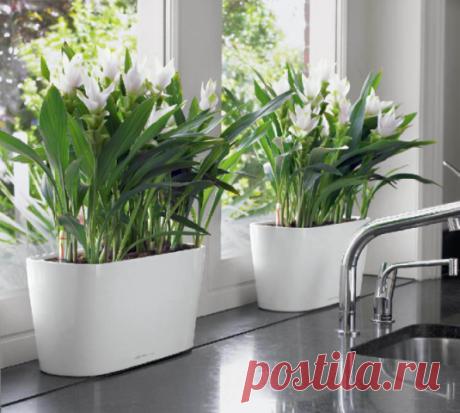 Еще один совет по поливу комнатных растений! — Полезные советы