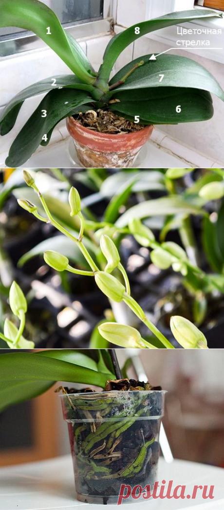 Соблюдай эти 9 правил и твоя орхидея будет цвести круглый год