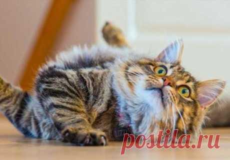 6 особенностей жизни с котом, о которых не догадываются даже опытные заводчики.
